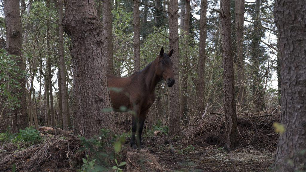 Ein Leben mit Pferden, naturnah, gemeinsam und idyllisch. Wer träumt nicht davon? Nun durften wir uns endlich diesen Traum erfüllen.