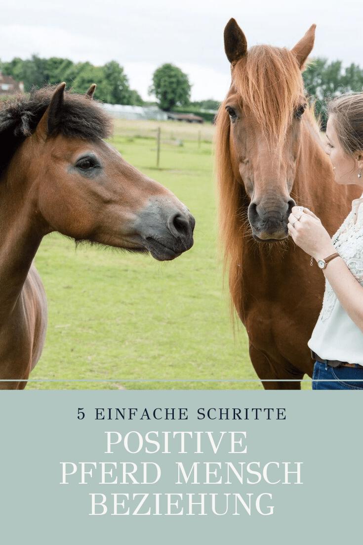 Hand aufs Herz – wir alle wünschen uns doch Harmonie. Hol dir meine kostenlose Guideline mit 5 einfachen Schritten für eine positive Pferd-Mensch-Beziehung.