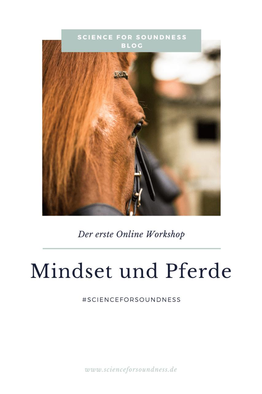 Mindset und Pferde ist dein Online Workshop für eine positive Pferd-Mensch-Beziehung. Lerne dein bestes Selbst zu sein für ein vertrauensvolles Miteinander.